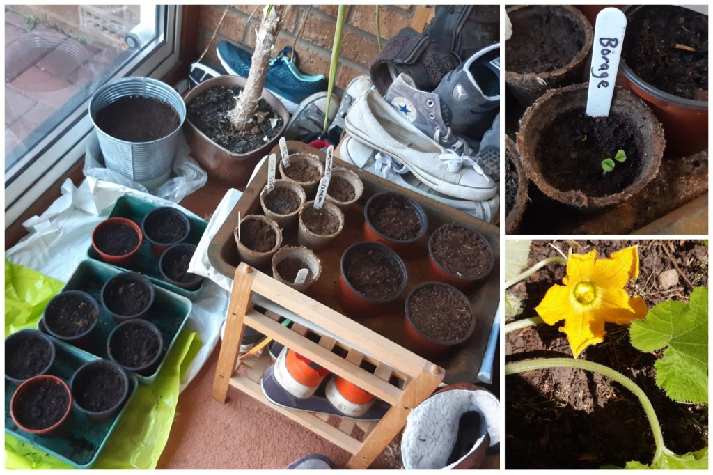 Vegetables germinating in the porch