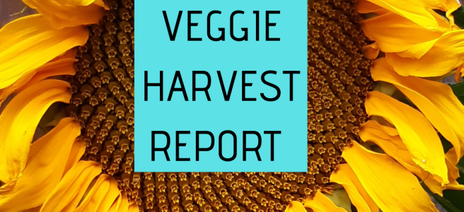 "Caption ""Veggie Harvest Report"" with the backdrop of a bright, imperfect sunflower"