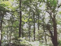 Sunlight piercing through green trees