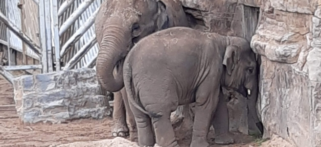 Elephants are for the wild and conservation projects, not for birthdays